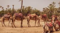Wahhabi: Sejarah Singkat dan Ajaran