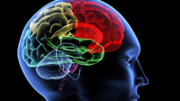 Model Pembelajaran Brain Based Learning Adalah : Membahas Pengertian, Tujuan Langkah Penerapan, Kelebihan dan Kekurang Brain Based Learning Secara Lengkap