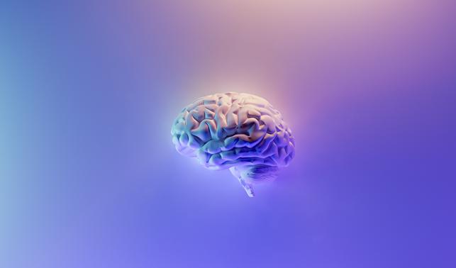 Peran Otak Kecil dalam Evolusi Otak Manusia