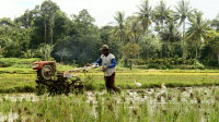 Kebudayaan Jawa : Kepercayaan, Kekerabatan, Politik, Ekonomi, dan Kesenian