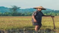 Kebudayaan Sunda : Kepercayaan, Kekerabatan, Politik, Ekonomi dan Kesenian