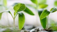 Bagaimana Proses Terbentuknya Biji Pada Tumbuhan?